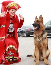 """警犬的""""女粉丝""""――2010年3月11日,十一届全国人大三次会议在北京人民大会堂举行第四次全体会议,会场外执勤民警携警犬对广场车辆进行安检。"""