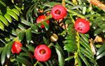 珍稀树种的种植与开发