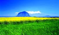 花香鸟语 春色世界任你游 春季出境赏花全攻略
