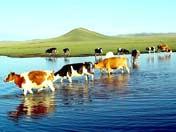 线路一:西宁-日月山-倒淌河-青海湖二朗剑景区-金银滩草原-丹噶尔古城