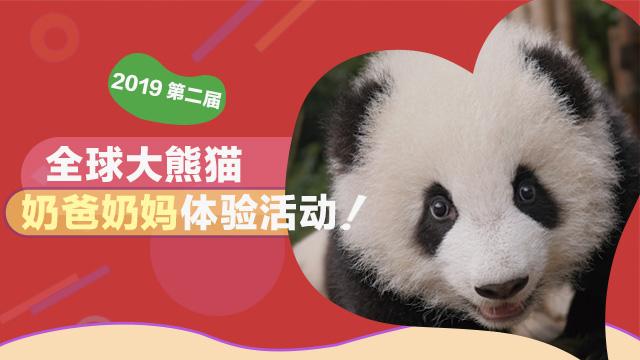 全球大熊猫奶爸奶妈体验活动