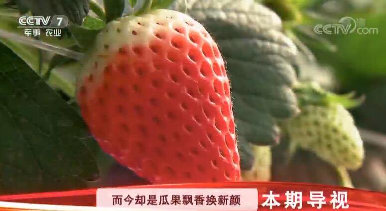 """[科技苑]乡村治污绿智慧 水里捕鱼 粪里淘""""金"""" 20190228"""