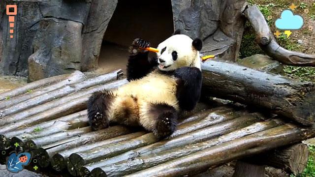 《精彩一刻》 一觉醒来就有吃的_熊猫频道