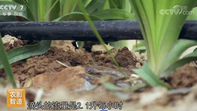 [每日农经]刻不容缓 黄花菜求水 20190626
