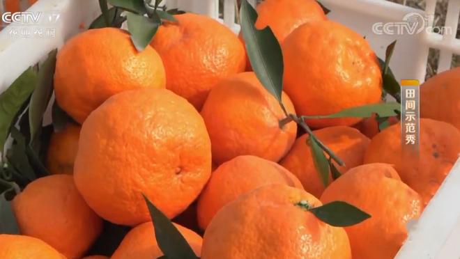 《田间示范秀》 20200416 橘园重生记