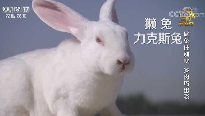 《田间示范秀》 20200729 獭兔住别墅 多肉巧出彩