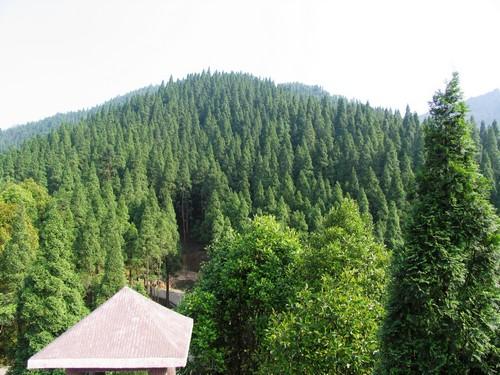 生态风景林--小坪森林公园