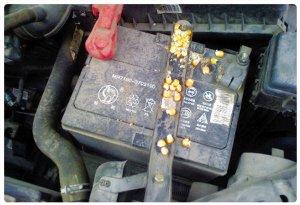老鼠钻进发动机舱隐患大 咬线路或致车起火