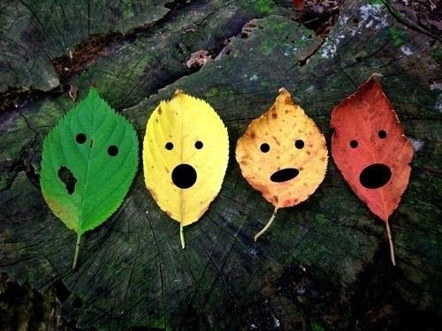 用落叶手绘的创意树叶作品图