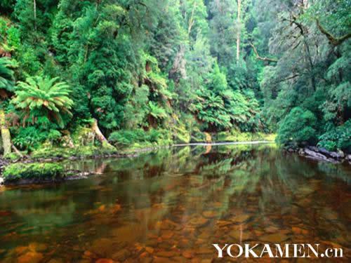热带雨林的美景