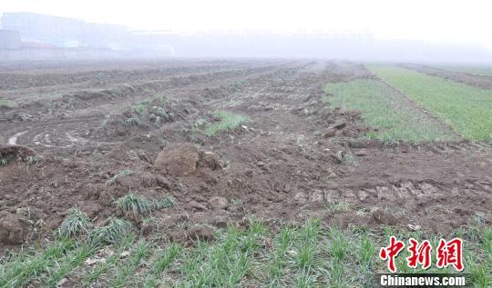 河南项城夜毁麦田几十亩称急于建房安置拆迁户