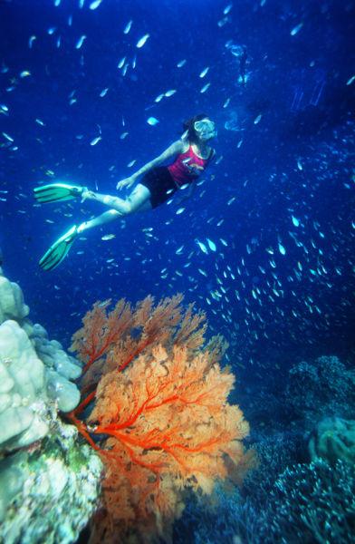 壁纸 海底 海底世界 海洋馆 水族馆 桌面 392_600 竖版 竖屏 手机