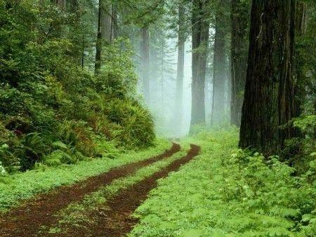 森林海洋延向天边
