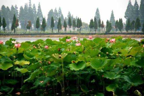 春风又绿江南岸 梦醉金陵的生态休闲之旅