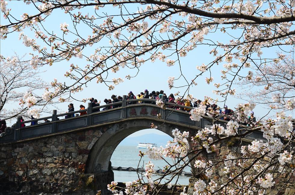 樱花烂漫正当时 在花海中享受春意