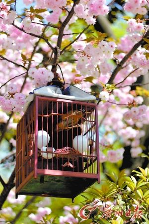 鸟语花香的复兴公园