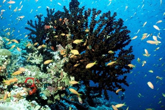 的海洋生物资源
