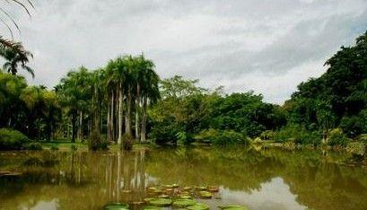 云南西双版纳热带雨林