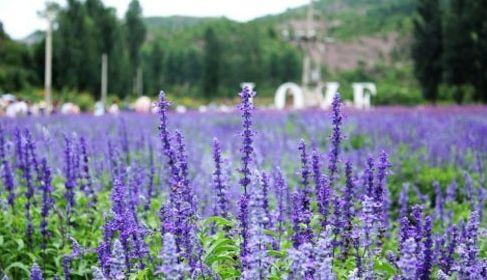 紫海堤香艺术庄园