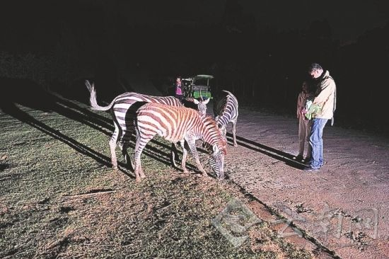 野生动物园看夜间动物 记者 周明佳 摄
