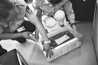 8月26日,大洋路农副产品批发市场海鲜大厅办公室,工作人员在封存涉嫌加糖的海参。新京报记者 王嘉宁 摄