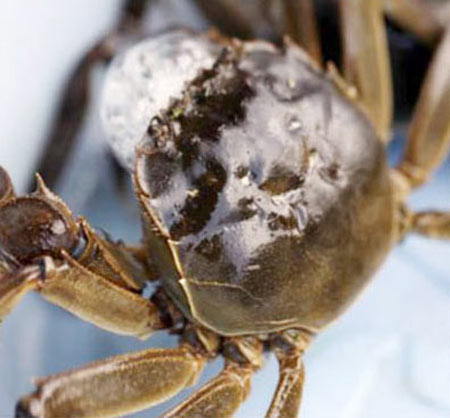 揭秘挑选大闸蟹的技巧