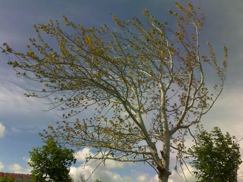 被风雕琢的树附