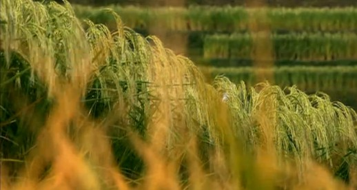 《舌尖上的中国》第一季 第七集 《我们的田野》