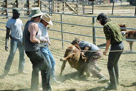 (大家在一起套牛。图据@卢卢相片生活)