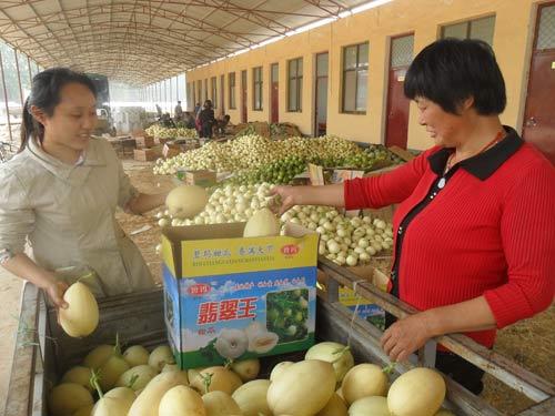大学生村官正在帮助村民给甜瓜装箱