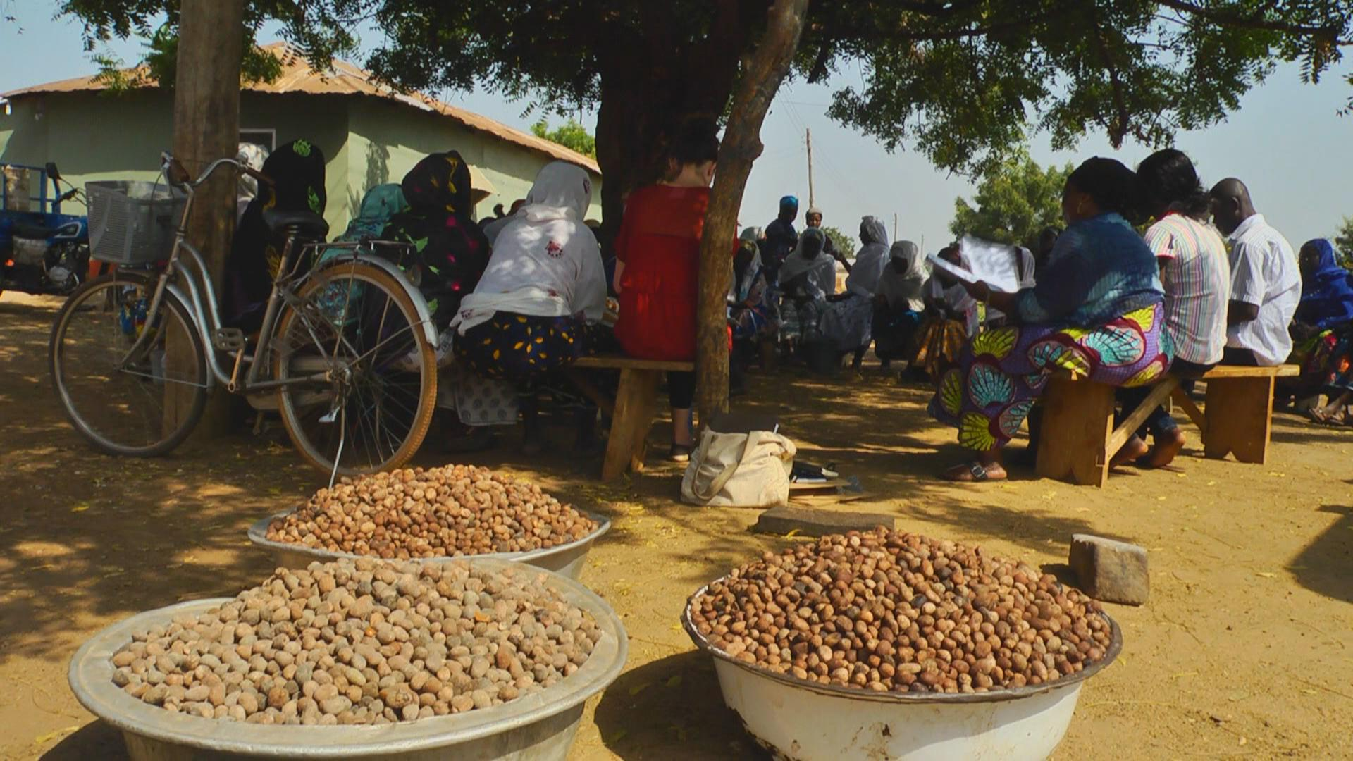 Shea nuts in front view. The women gathered in a meeting have collected the nuts from the fields.