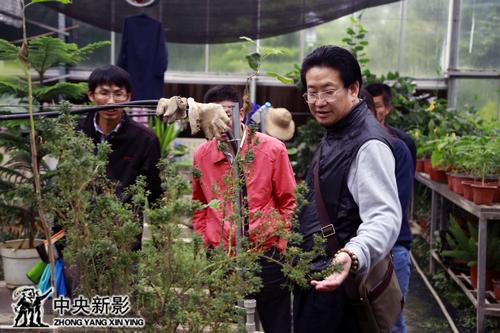 剧组在植物园中参观