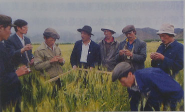 在拉萨工作期间,孔繁森高度重视科学技术推广。这是他和科研人员在田间研究科学种田。