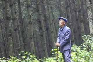 杨善洲充满深情地守望树林。