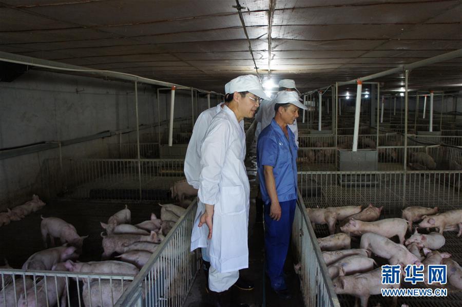 王一成(前)带领学生在基层养猪场考察(资料照片,2013年8月摄)。