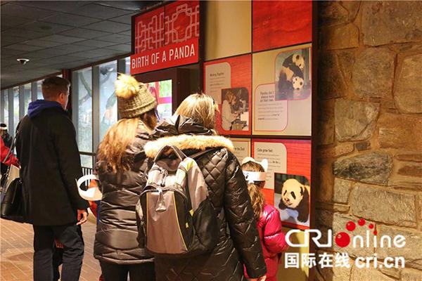 美国访客在熊猫馆内浏览装修后增添的展示墙。(摄影 刘坤)