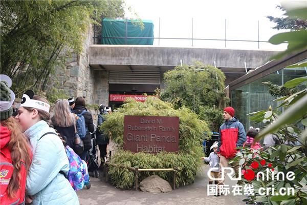 熊猫馆外络绎不绝的访客。(摄影 刘坤)
