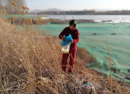 贺玉凤在妫河旁捡垃圾