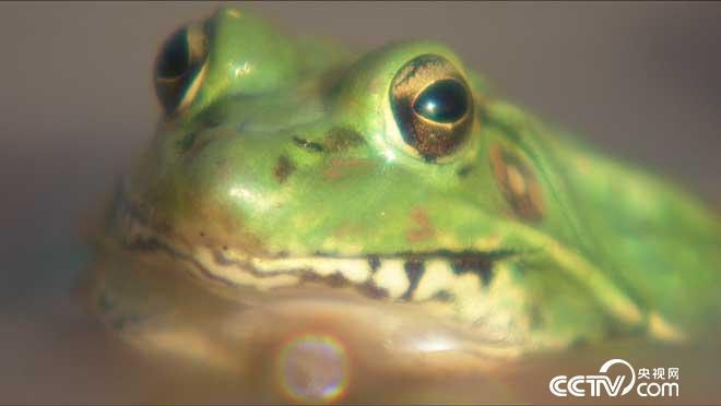 [致富�]四川遂��方洋土里挖青蛙年�u500�f元