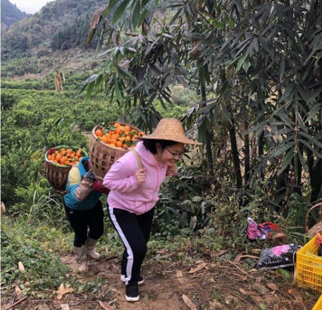 圖為黃文秀生前在果園干活