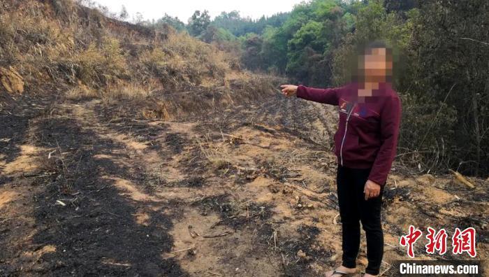 云南陇川:村民违规用火烧甘蔗叶烧毁45公顷森林
