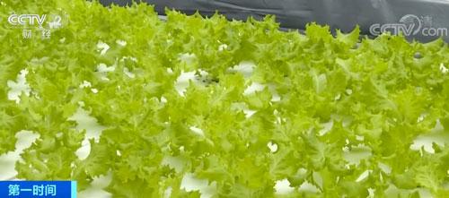 上海:线上销售助力 规模化蔬菜基地影响小