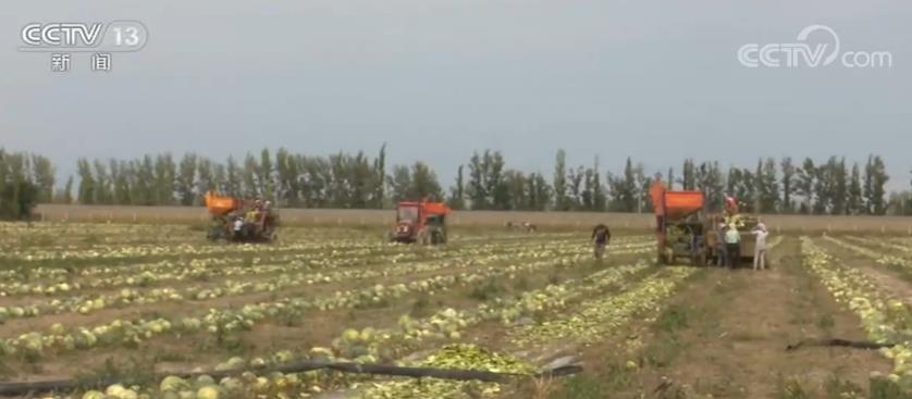 新疆夏播农作物面积748.88万亩 较上年同期增加106.73万亩