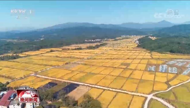 农业农村部:秋粮收获过六成 各地多措并举稳步提高粮食产能