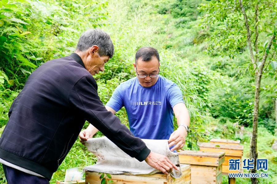 2020年7月7日,中益乡华溪村驻村第一副书记罗风华(右)查看贫困户谭登周养殖的中华蜜蜂蜂蜜生产情况。新华社记者 刘潺 摄