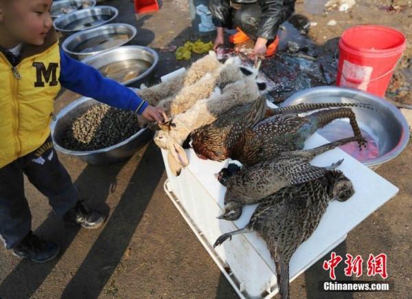 大量猎杀和贩卖违反了我国的野生动物保护法