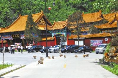 河南生态建设十佳旅游区——净影风景区