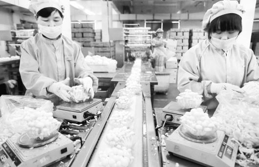 5月7日,青岛丰科生物科技有限公司的工人在车间里加工真姬菇.