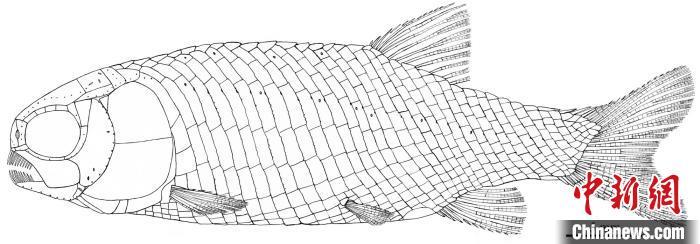 """中国科学家最新研究发现2.44亿年前""""小巧漏卧鱼"""""""