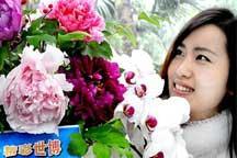 Peony blossom ready for World Expo